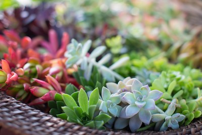 Spring Retreat Succulents